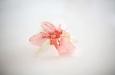 """Розовый ирис"". Фото 3."