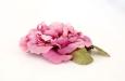 """""""Пион махровый розовый"""". Фото 2."""