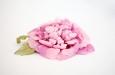 """""""Пион махровый розовый"""". Фото 4."""