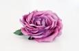 """Английская роза """"меланж"""". Фото 1."""