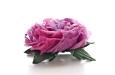 """Английская роза """"меланж"""". Фото 3."""