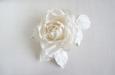 """""""Ланком"""" роза белая. Фото 2."""
