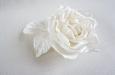 """""""Ланком"""" роза белая. Фото 4."""