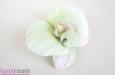 """Орхидея"". Фото 1."