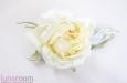 """""""Грация"""" роза. Фото 2."""