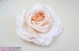 """""""Жениаль"""" роза, шелк, чайная. Фото 1."""