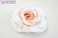 """""""Жениаль"""" роза, шелк, чайная. Фото 3."""