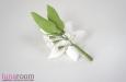 """""""Орхидея и незабудки"""" брошь. Фото 4."""